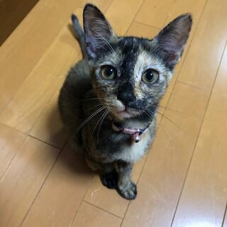 助けてください。可愛いサビ猫ちゃん
