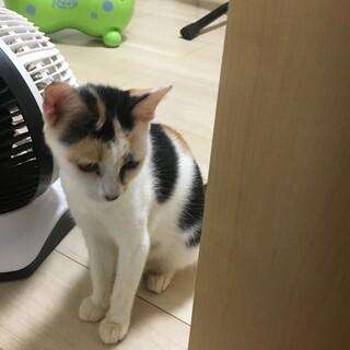 保護猫メスのミケ