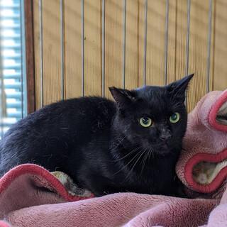 Y26 黒猫くん