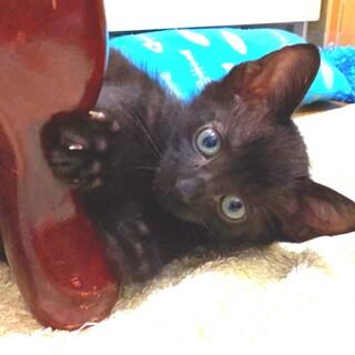 くますけ☆黒猫兄妹