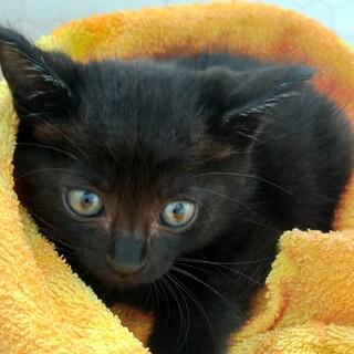 くまかく☆黒猫兄妹