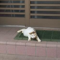 家の前に鎮座する猫様