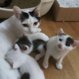 しっかり者の優しい母さん猫
