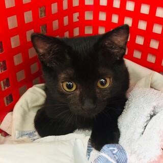 甘えん坊の黒猫ちゃん