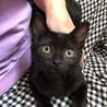 甘えん坊の黒猫ちゃん サムネイル2