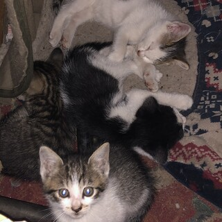 帯広市内の子猫