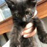 幸運の黒猫ちゃん 姉妹 サムネイル3