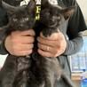 幸運の黒猫ちゃん 姉妹