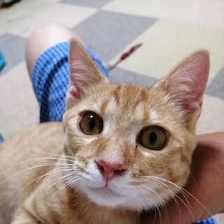 安定期に入った子猫です。実物はもっと可愛いです。