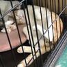 近隣住民から嫌がらせをされた子猫 サムネイル6