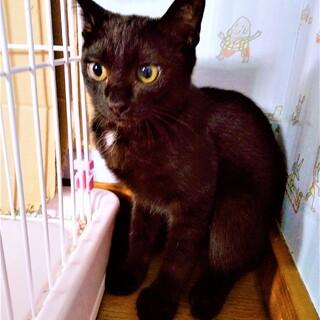 きりっと黒猫ナイトくん❣