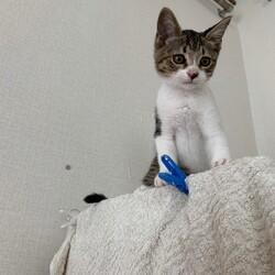 保護猫の譲渡会 サムネイル3