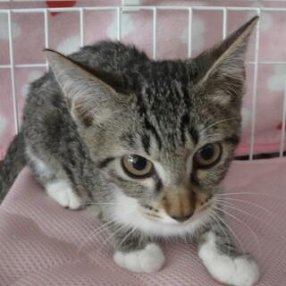 美猫なリマちゃん☆3カ月半