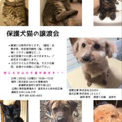 保護犬猫の譲渡会を開催いたします!
