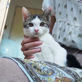 ビビりで超甘えん坊なバン君3ヶ月・人も猫も好き!