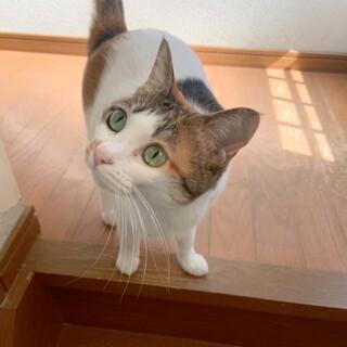 三毛猫5歳