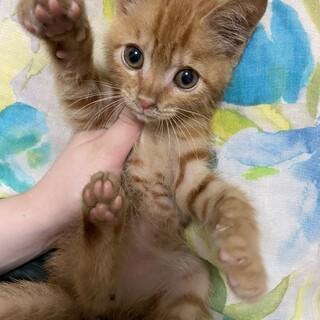 可愛い子猫です!里親になって下さい!