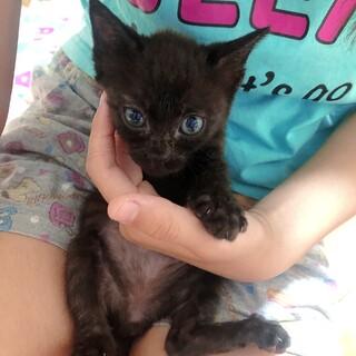 黒猫ちゃんの男の子