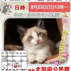 猫の譲渡会in加古川