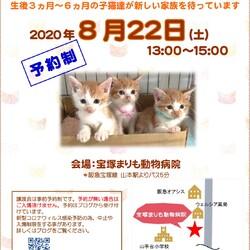 子猫だけの譲渡会 in 宝塚市