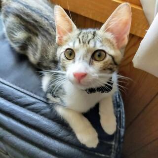 甘えん坊でやんちゃな子猫キティ(仮)さん