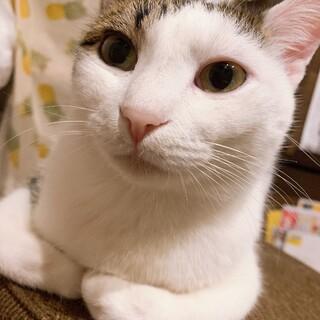 人懐っこい成猫(2歳)