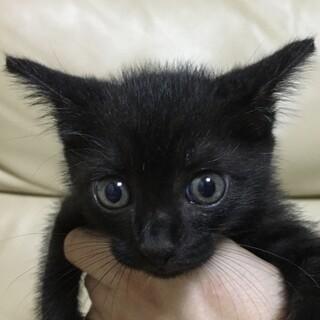 交渉中です。黒猫ひじき君