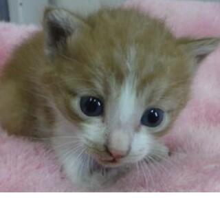 里親様に迎えられました。子猫111
