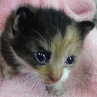 里親様に迎えられました。子猫112