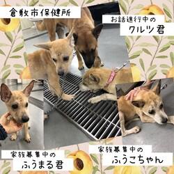 「倉敷市保健所お散歩スペース物語」サムネイル2