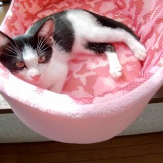 白黒猫のマカちゃん♡♀