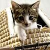 子猫2ヶ月半、里親募集中。