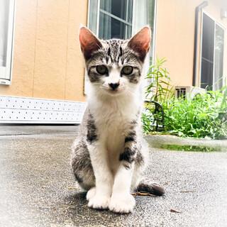 迷い猫メスの可愛い子猫ちゃんおそらく3.4カ月