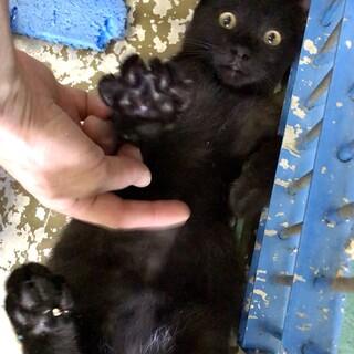 甘えん坊な黒猫の男の子