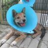 去勢手術済み・尻尾フリフリおす子犬