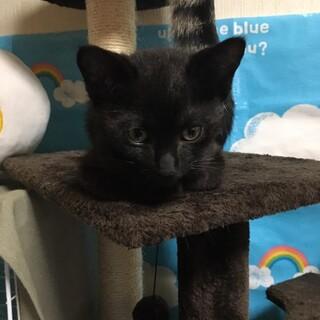 【急募】くまさんみたいな黒猫ちゃん