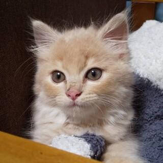 可愛い子猫ロア君
