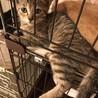 【保護猫】ごんごん♀子猫・キジトラ
