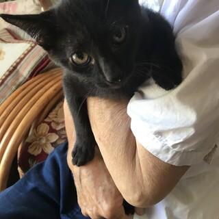 毛並みツヤツヤ黒猫ちゃん