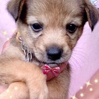 20-M540 小さな可愛い仔犬♪