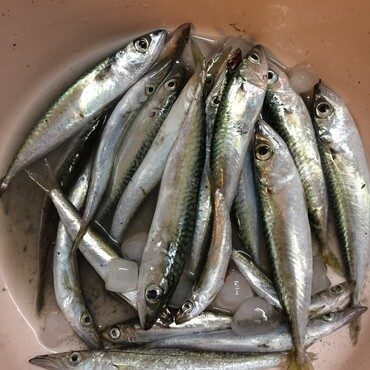 潮で釣れる魚が違うけど、とりあえず喜んでる⁇でもね…メバルはどこ?えーと、探してきます(;´д`)