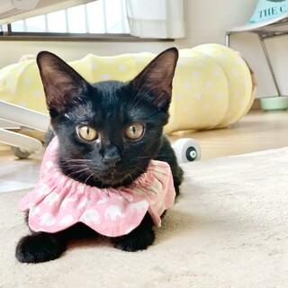 元気いっぱい人懐こい5ヶ月の黒猫「アクビちゃん」