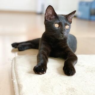 元気いっぱい5ヶ月の黒猫「クシャミちゃん」