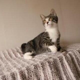 星空(セラ)♡人間に骨折させられた子猫