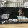 虐待発生公園から保護した三毛猫の未唯ちゃん