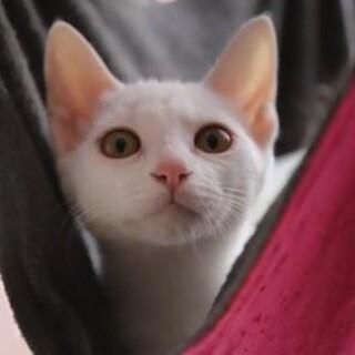 ゆきみ♡とにかく美猫!実際あったらもっと美猫!!