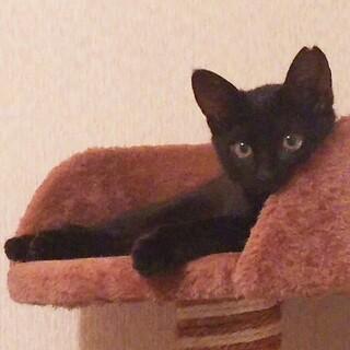 可愛い黒猫アン2ヶ月半、人を怖がらなくなりました