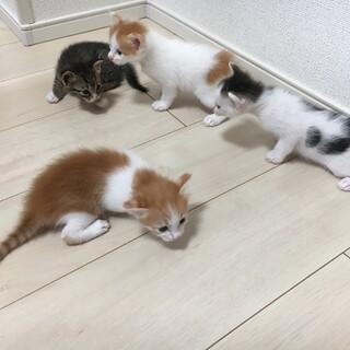 四匹の子猫が生まれました