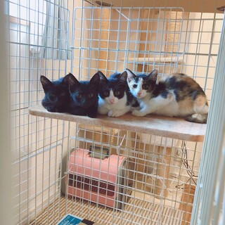 子猫4匹と母猫を保護しました