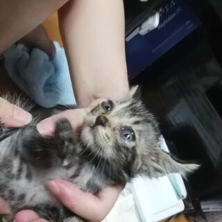 ゴミ山から救出! キジトラ&クロネコの赤ちゃん